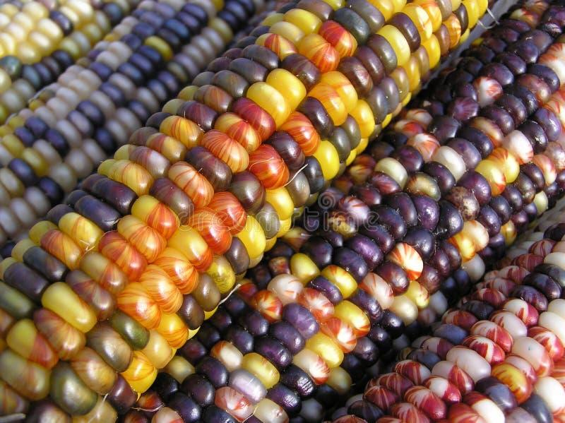 Ángulos del maíz indio foto de archivo. Imagen de peregrinos - 1295954