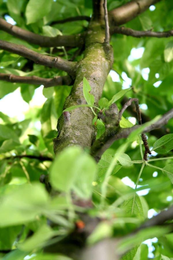 Download Árbol foto de archivo. Imagen de registro, crezca, árbol - 1280582