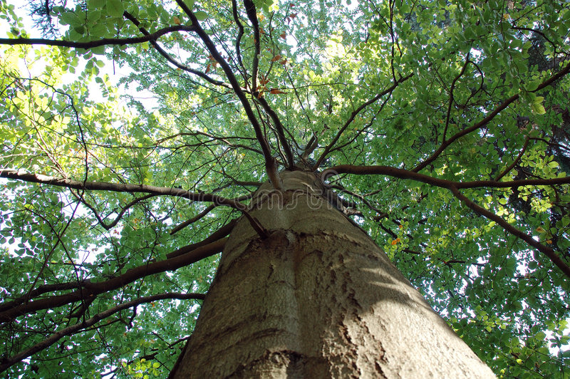 Download Árbol imagen de archivo. Imagen de hoja, corteza, árbol - 1286569