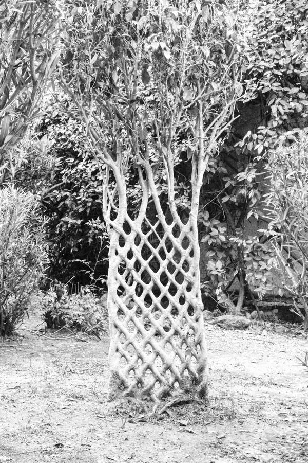 Árbol foto de archivo