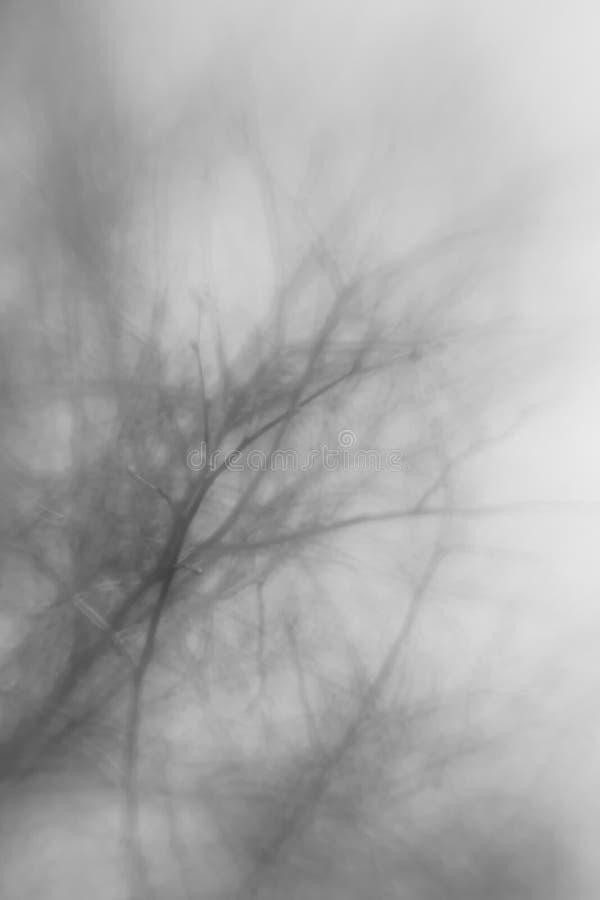 Árbol abstracto con el foco en un brance floreciente foto de archivo