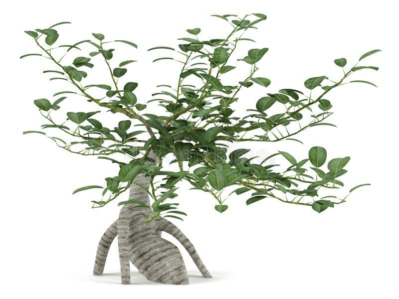 Árbol adornado del arbusto. Bonsais stock de ilustración