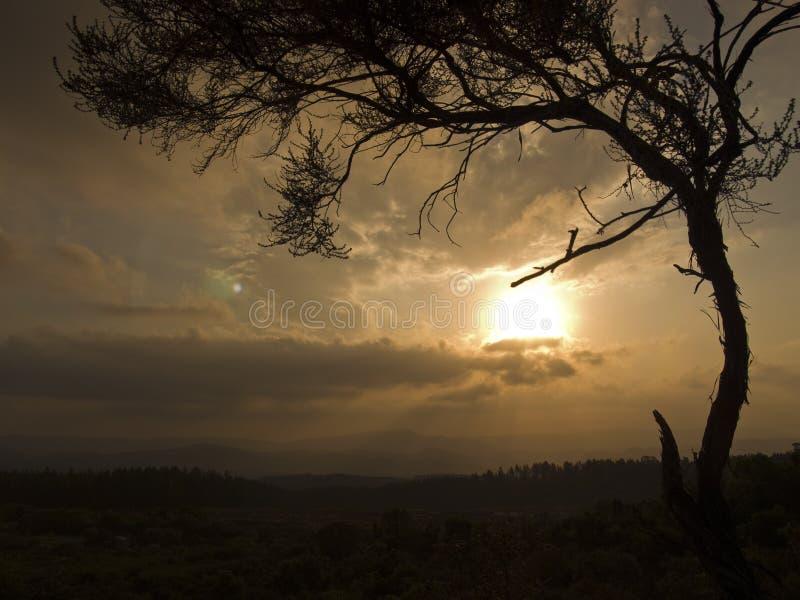 Download Árbol Africano En La Puesta Del Sol Imagen de archivo - Imagen de serene, marco: 7290013