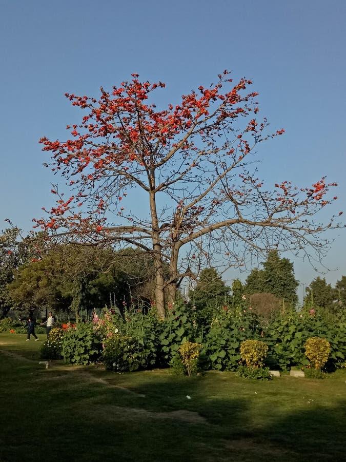 Árbol agradable foto de archivo libre de regalías