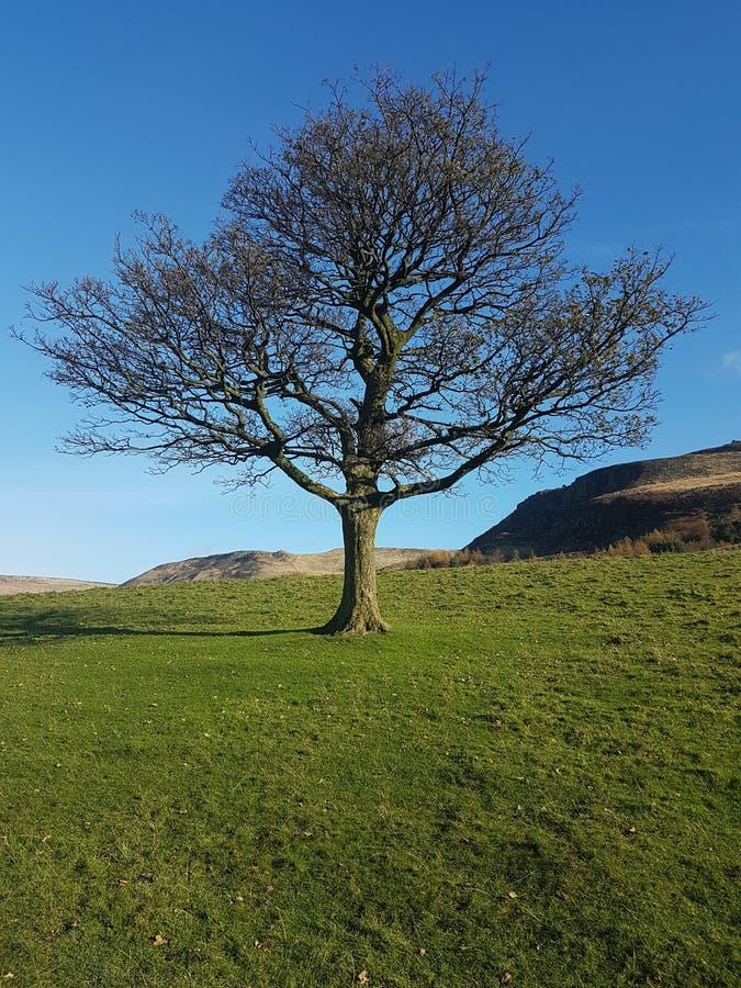 Árbol agradable en el parque nacional Reino Unido del distrito máximo foto de archivo
