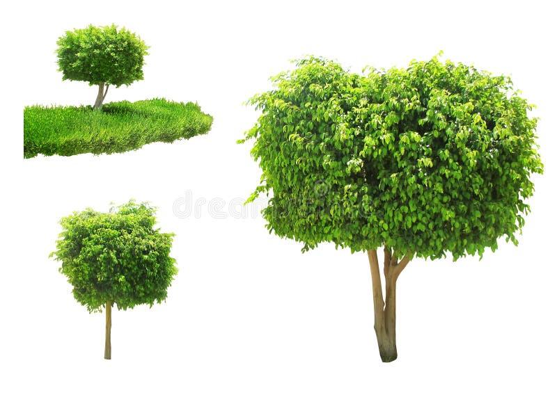Árbol aislado imagen de archivo libre de regalías