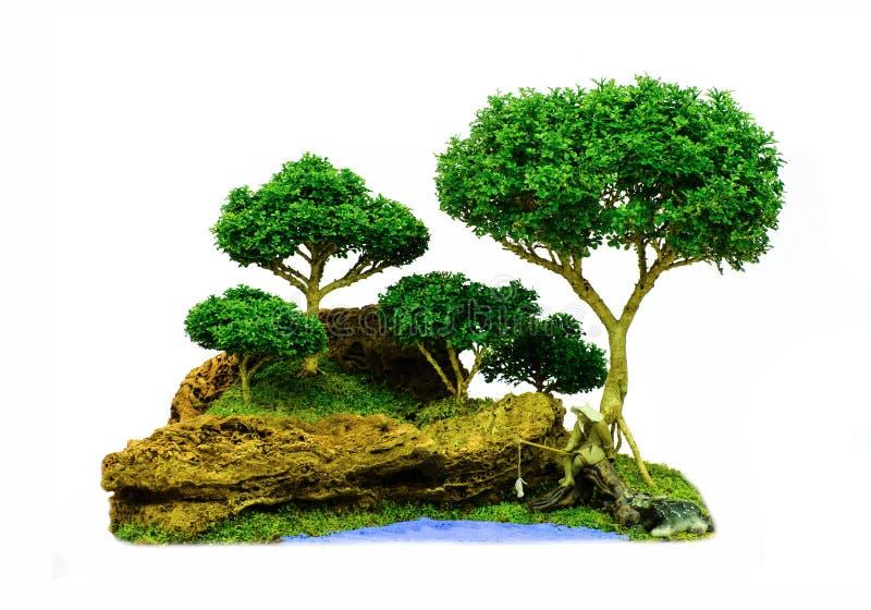 Árbol aislado de los bonsais - enano del paniculata de Murraya fotos de archivo