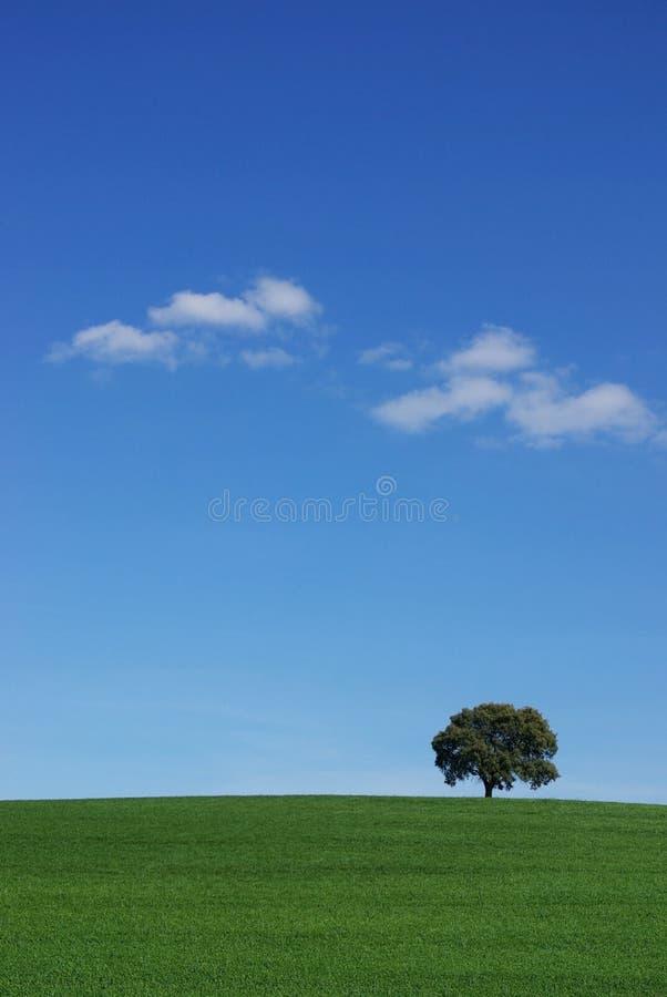 Árbol aislado en campo. fotos de archivo