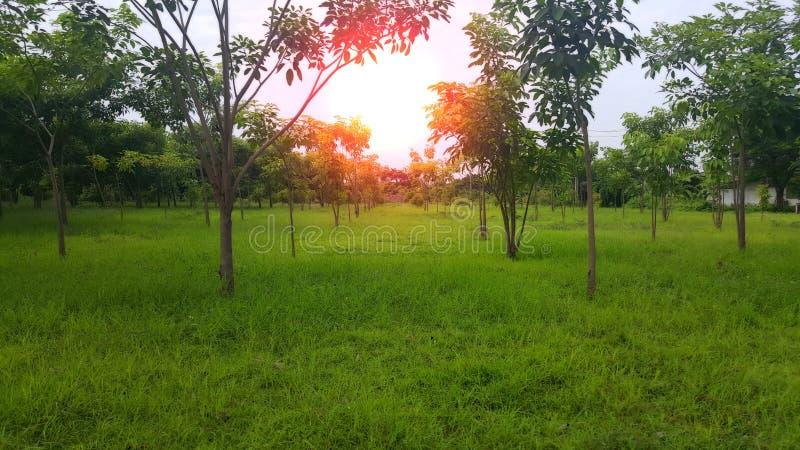 Árbol alineado en un parque imagen de archivo libre de regalías
