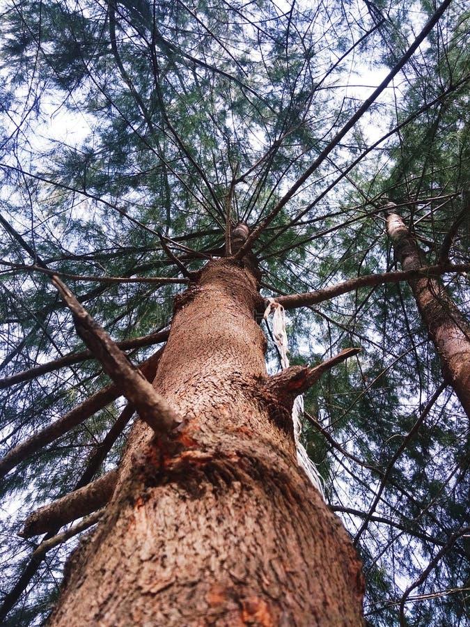 Árbol altísimo foto de archivo