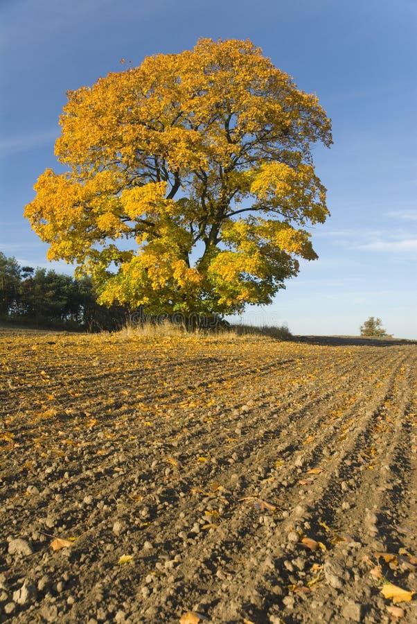 Download Árbol amarillo foto de archivo. Imagen de campo, amarillo - 7283702