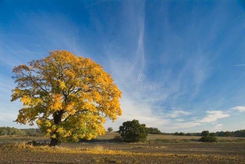 Download Árbol amarillo imagen de archivo. Imagen de marrón, verde - 7283707