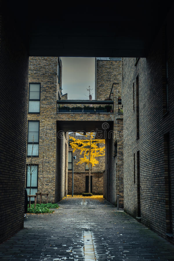 Árbol amarillo del otoño en el patio urbano en Brujas, Bélgica fotos de archivo libres de regalías