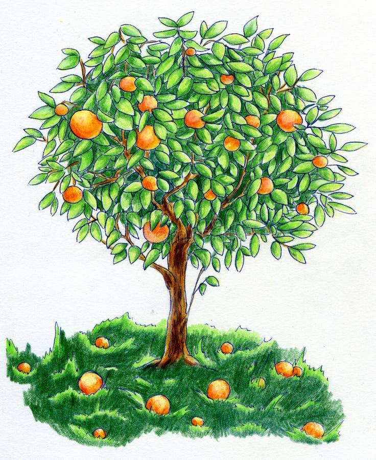 Árbol anaranjado stock de ilustración