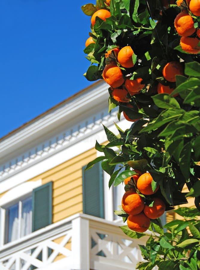 Árbol anaranjado en yarda imágenes de archivo libres de regalías