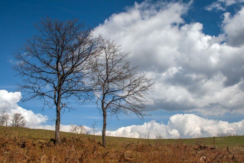 Árbol antes de la tormenta en la montaña de Plana foto de archivo libre de regalías