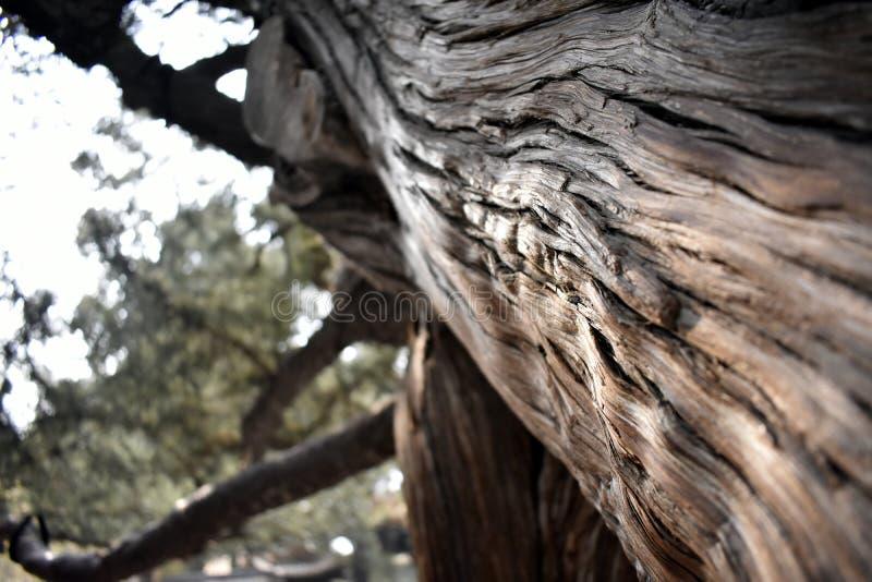 Árbol antiguo en la ciudad Prohibida fotos de archivo