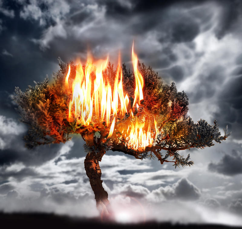 Árbol ardiente fotografía de archivo