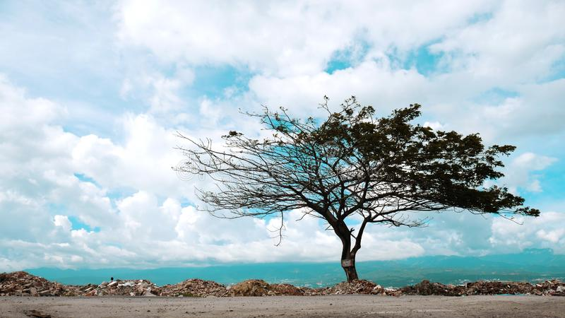 Árbol artístico después del desastre imagen de archivo
