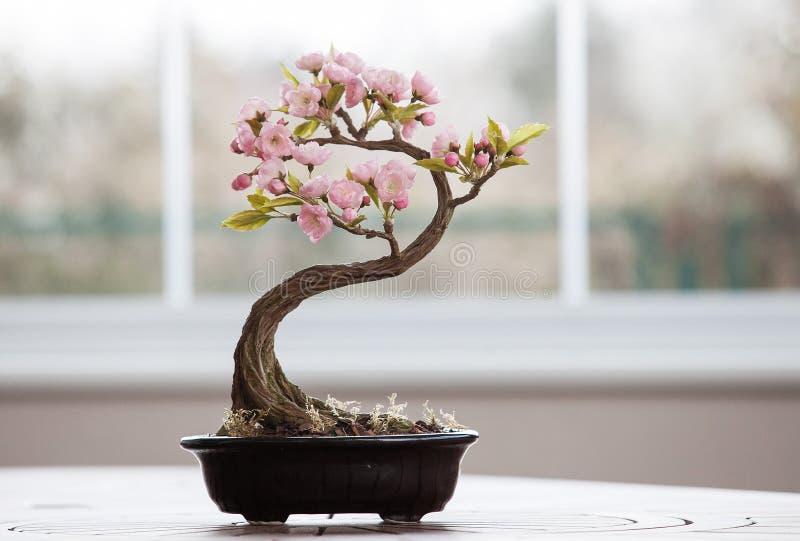 Árbol artificial de los bonsais con las flores foto de archivo