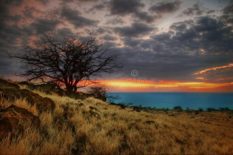 Árbol asoleado de Hawaii-2 foto de archivo libre de regalías