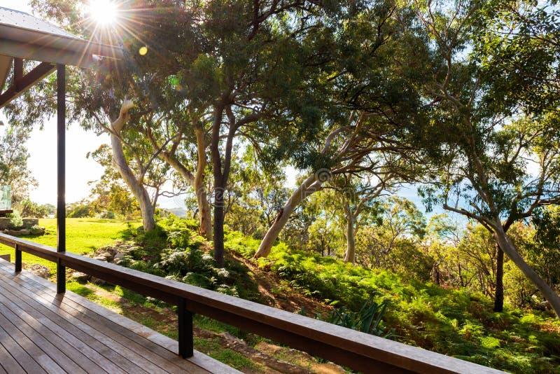 Árbol australiano de la cubierta y de eucalipto fotografía de archivo