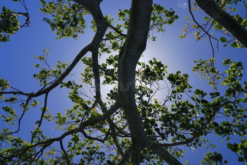 árbol bajo el sol imagen de archivo libre de regalías