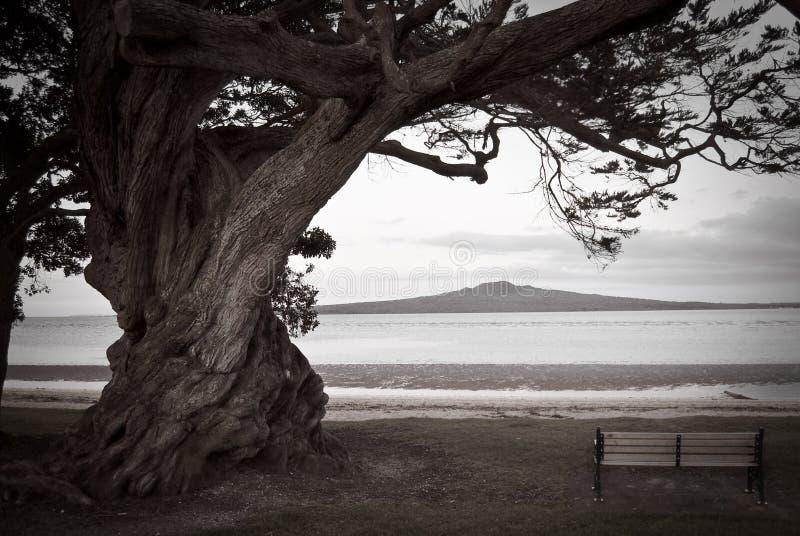 Árbol, banco y volcán solitarios imagen de archivo libre de regalías