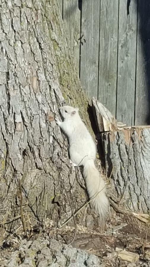 Árbol blanco de la ardilla fotografía de archivo libre de regalías