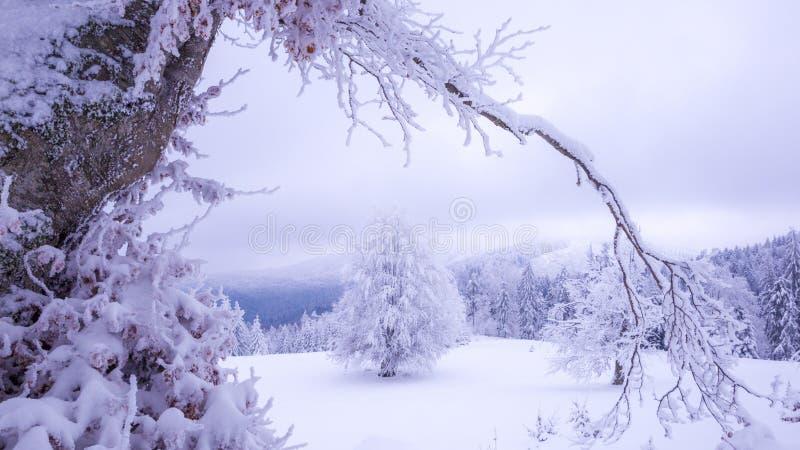 Árbol blanco en la nieve imagen de archivo