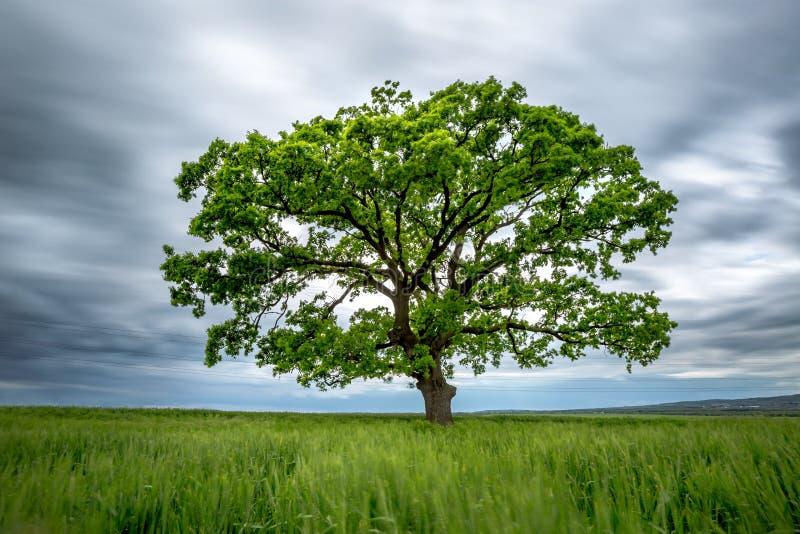 Árbol borroso del verde de la Largo-exposición en un campo imagen de archivo libre de regalías
