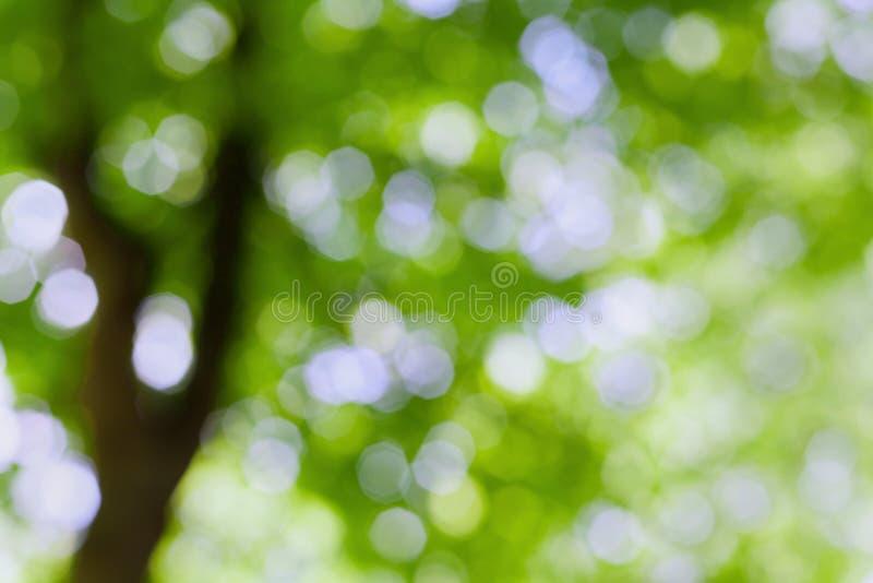 Árbol borroso hermoso del verano en el parque, fondo verde natural del bokeh fotografía de archivo libre de regalías