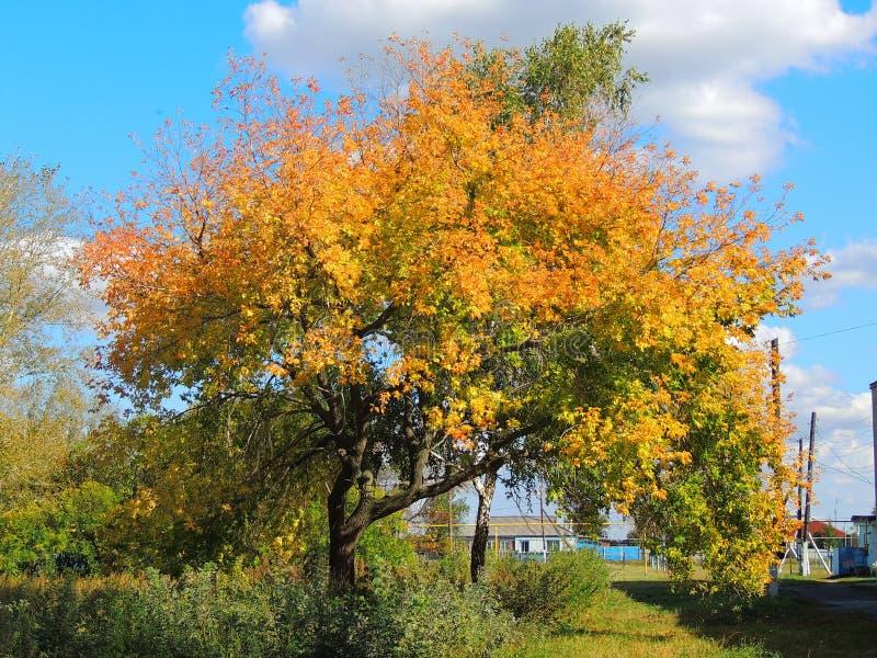 Árbol brillante del otoño foto de archivo libre de regalías