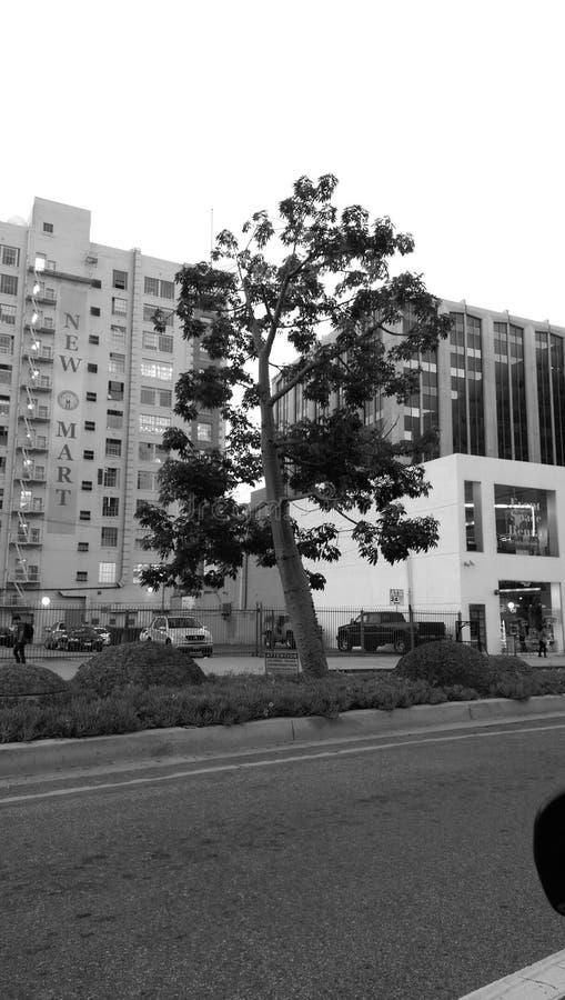 Árbol céntrico en Los Ángeles fotos de archivo