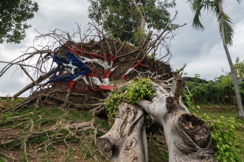 Árbol caido del huracán Maria en San Juan imagenes de archivo