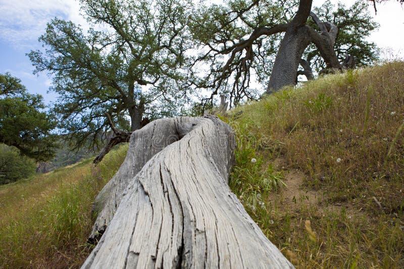 árbol caido en el parque nacional de los pináculos hermosos california américa imagen de archivo libre de regalías
