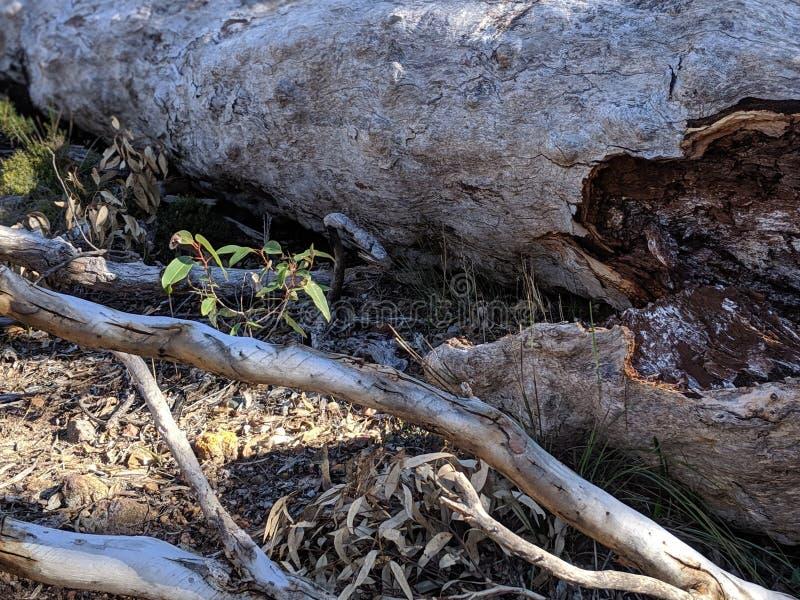 Árbol caido en piso del bosque imagenes de archivo