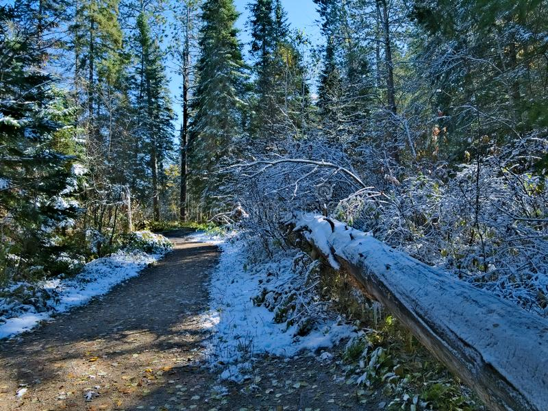 Árbol caido a lo largo de la pista de senderismo de Schoolcraft en parque de estado de Itasca en Minnesota foto de archivo libre de regalías