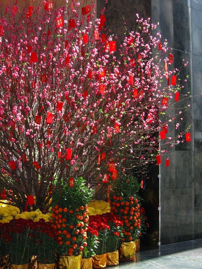 Árbol chino 2 del dinero del Año Nuevo fotos de archivo