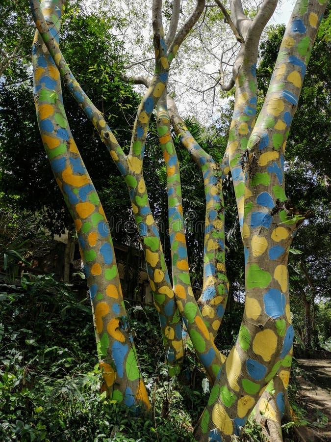 Árbol coloreado hermoso con la pintura, tronco de árbol cubierto con las manchas coloreadas, arte con la naturaleza imagen de archivo libre de regalías