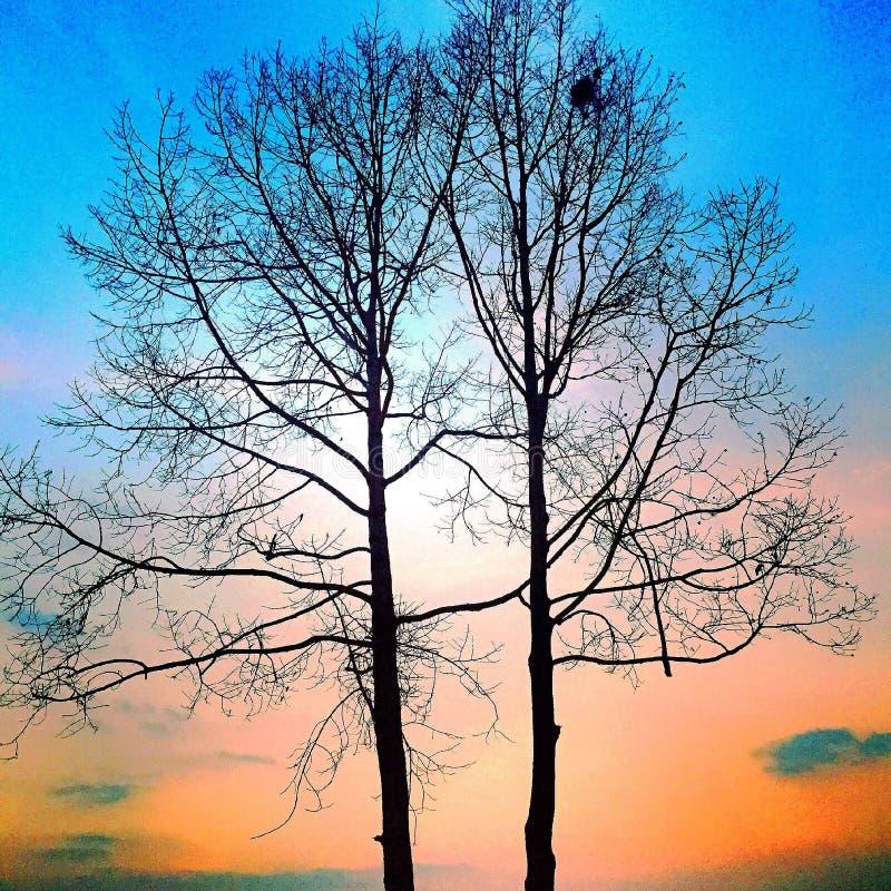 Árbol colorido fotografía de archivo