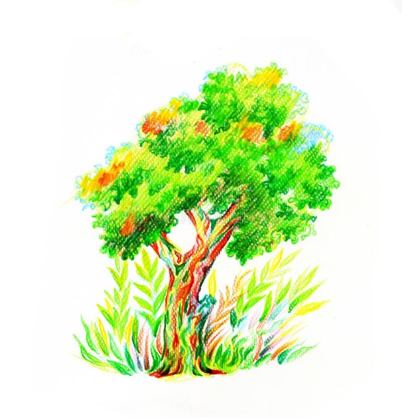 Árbol con el arbusto dibujado por los lápices del color imagen de archivo