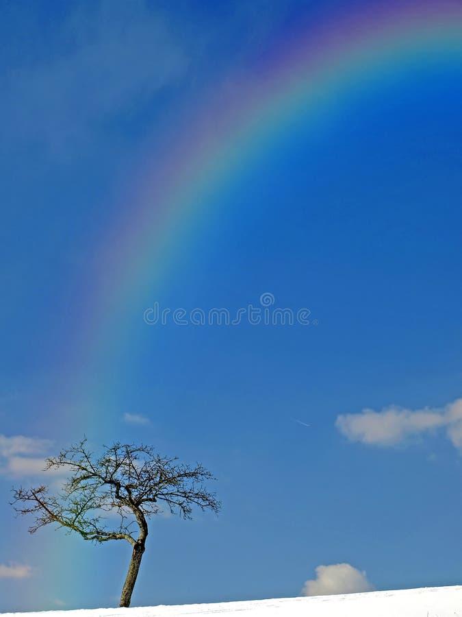Árbol con el arco iris en invierno foto de archivo