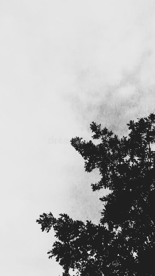 Árbol con el cielo blanco imagen de archivo libre de regalías