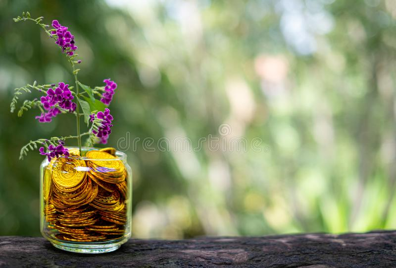 Árbol con el crecimiento de flores en la hucha de cristal de la pila de monedas de oro fotografía de archivo