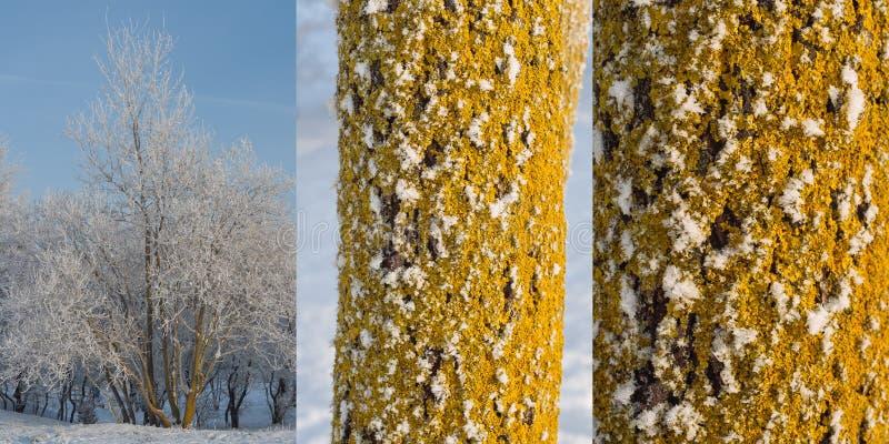 Árbol con el tronco y la corteza imágenes de archivo libres de regalías