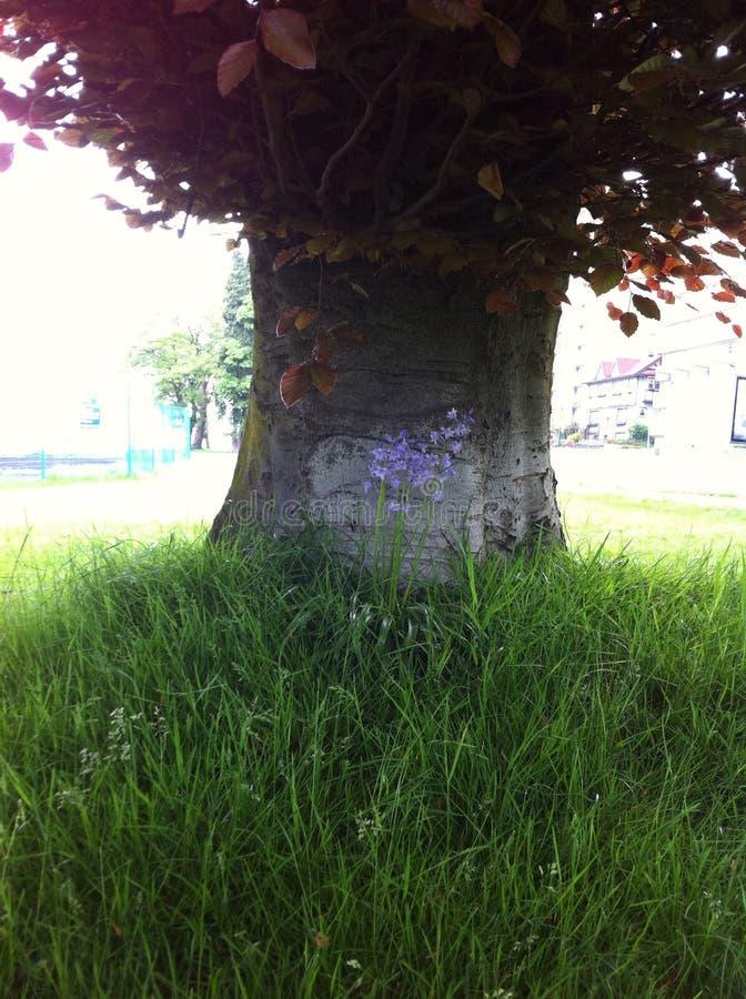 Árbol con la flor imagen de archivo libre de regalías
