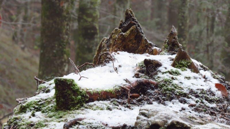 Árbol con la nieve en invierno, Fussen, Alemania fotografía de archivo