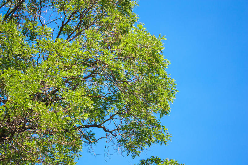 Árbol con la opinión del cielo fotografía de archivo libre de regalías