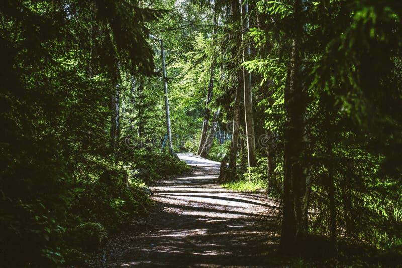 Árbol con la pequeña trayectoria del paseo en el bosque fotos de archivo libres de regalías